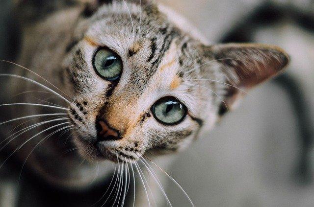 los sentidos de los gatos la vista