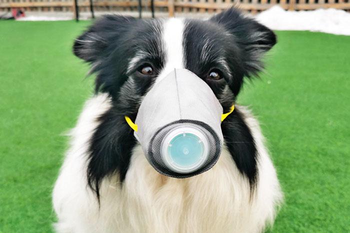 mascarillas para proteger a los perros