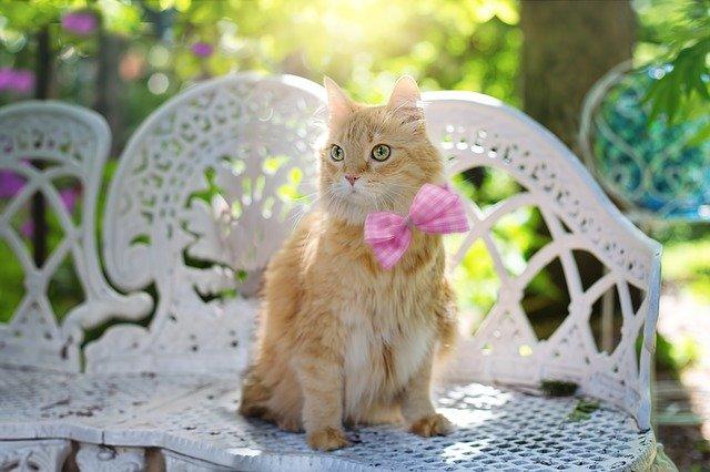 motivos de por qué a los gatos les gusta el sol