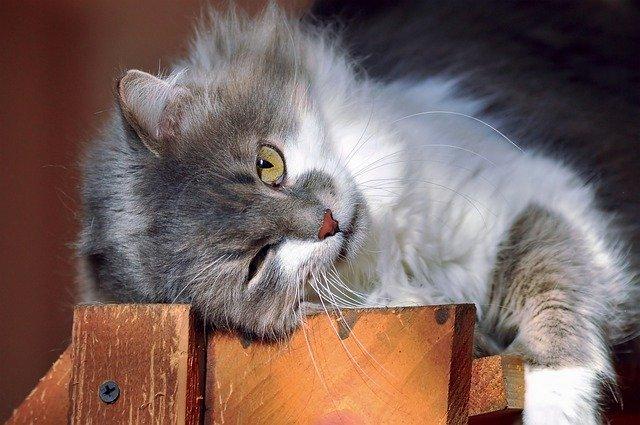 por qué a los gatos les gusta el sol