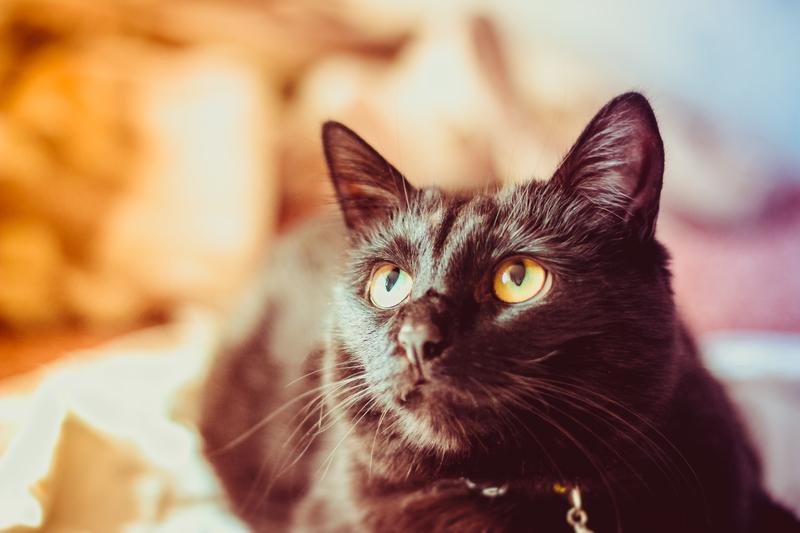 qué pasaría si los gatos desaparecieran de la Tierra