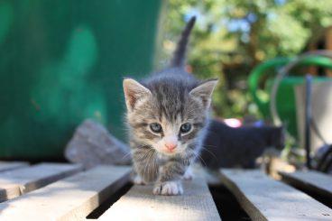 qué pasaría si los gatos desaparecieran del mundo