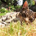 señales de un gato anciano