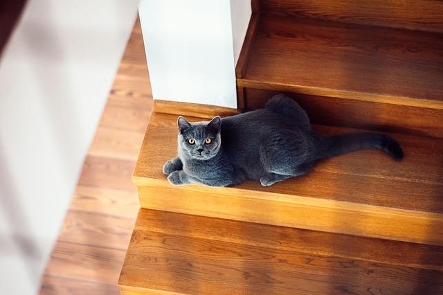 un gato anciano cambia su comportamiento