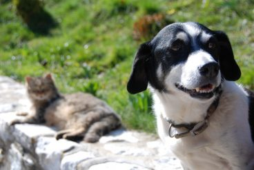 ascaridiasis en mascotas