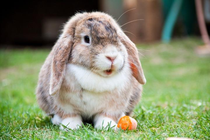 causas del estrés en conejos