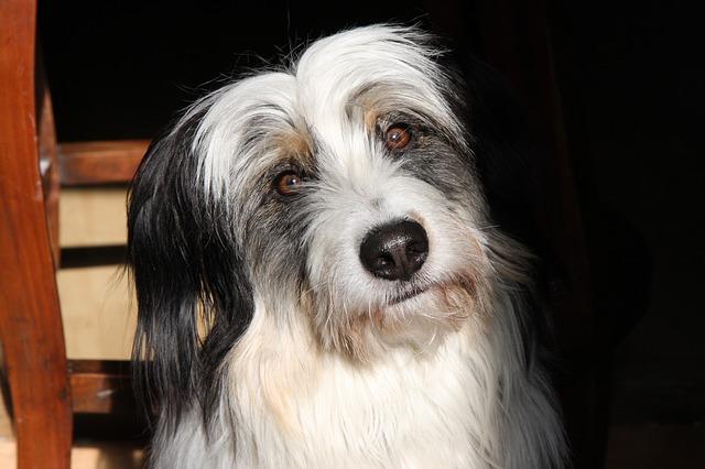causas del síndrome vestibular en perros