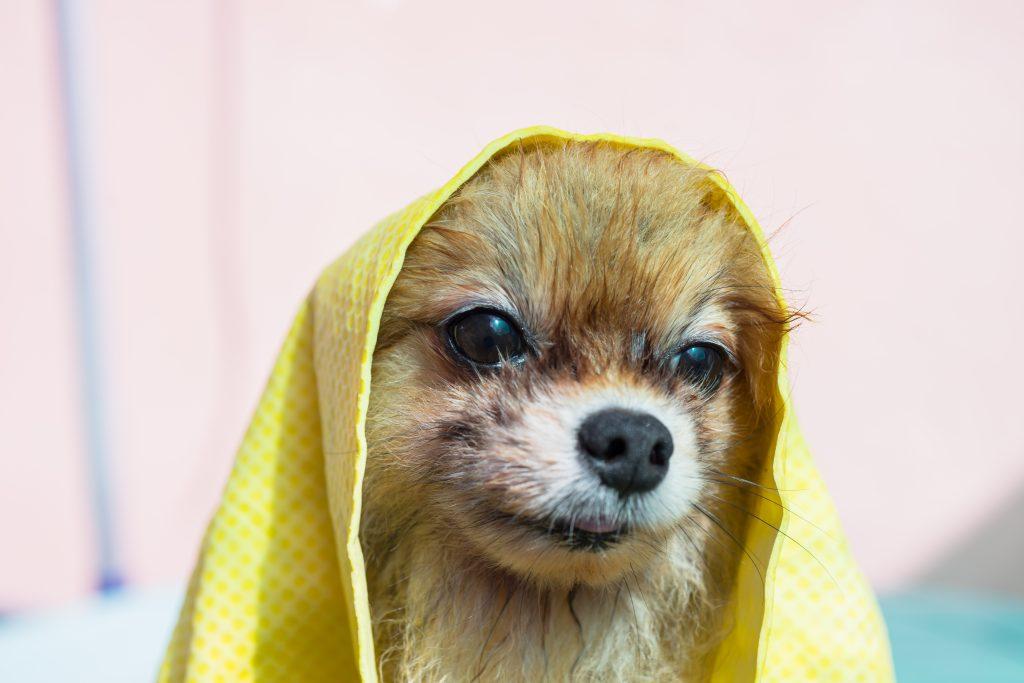 causas psicológicas por las que un perro tiembla