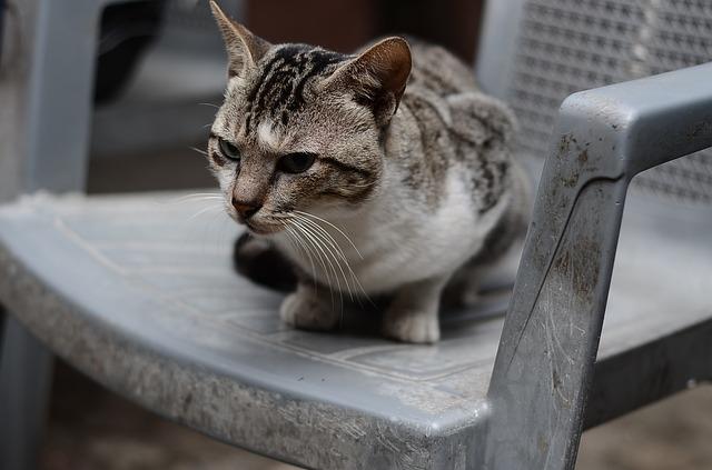 claves para entender a un gato