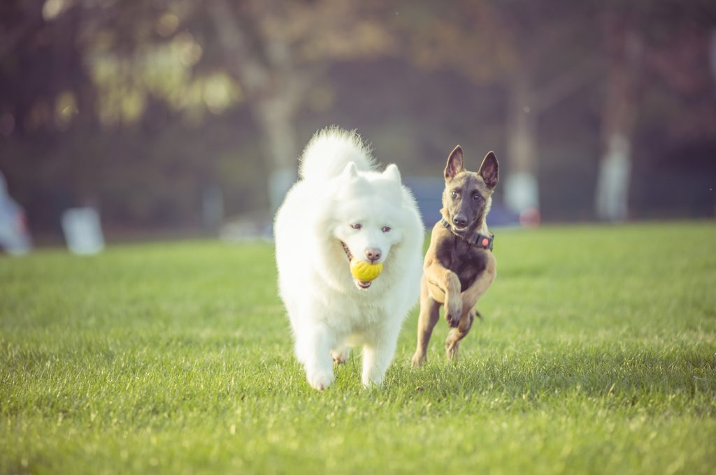 cómo ayudar a un perro con ansiedad