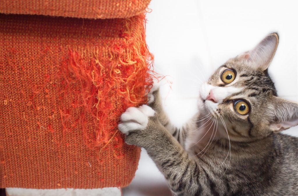 cómo entender a un gato por su comportamiento