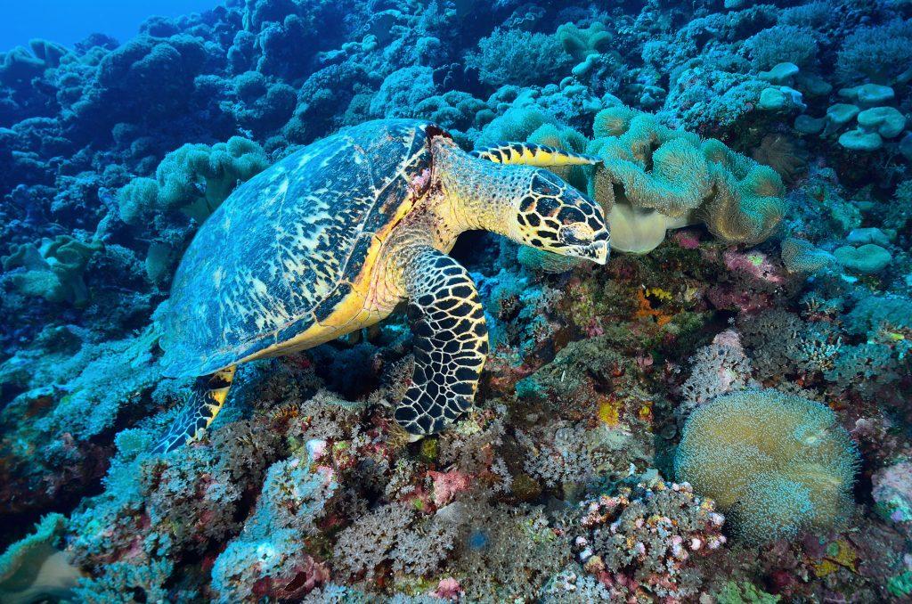 consecuencias de la desaparición de las tortugas