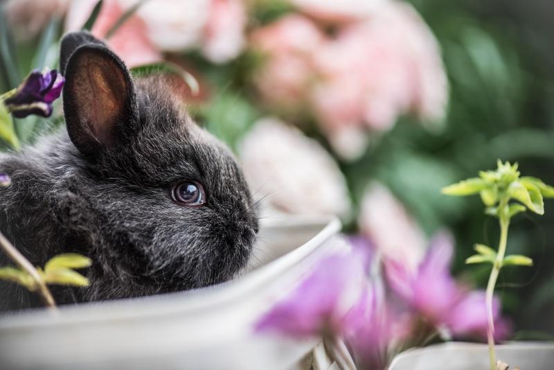 consejos para evitar el estrés en conejos