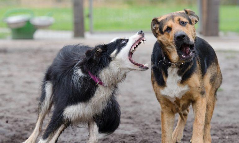 consejos para evitar el mal comportamiento de los perros