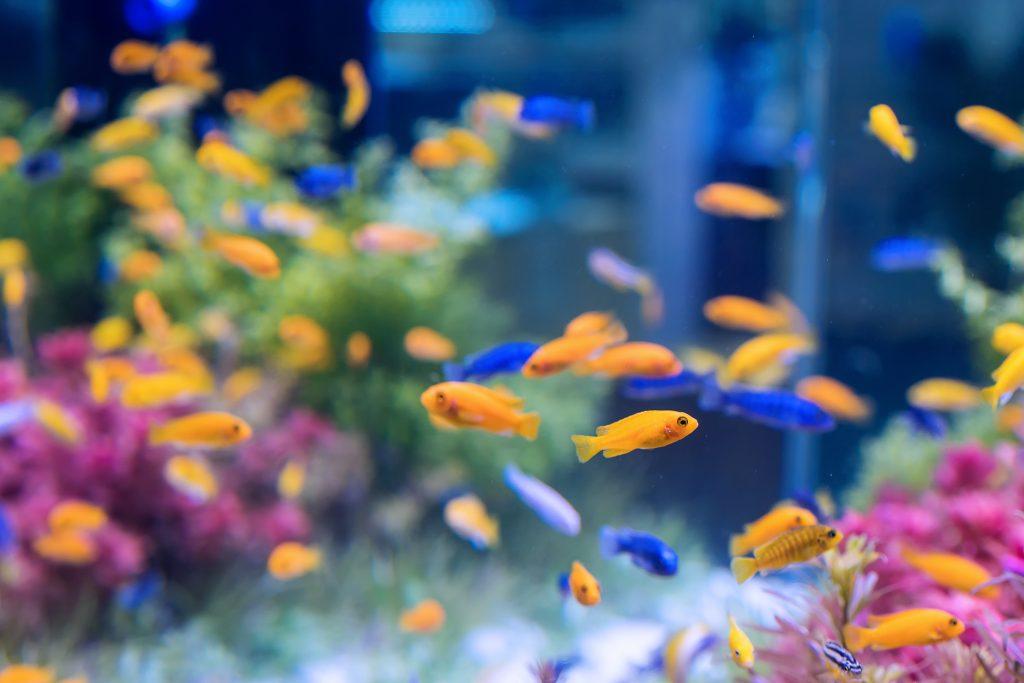 cuidado de mascotas acuario