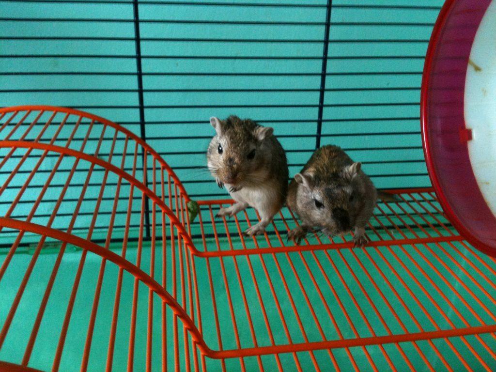 cuidados de mascota higiene de la jaula