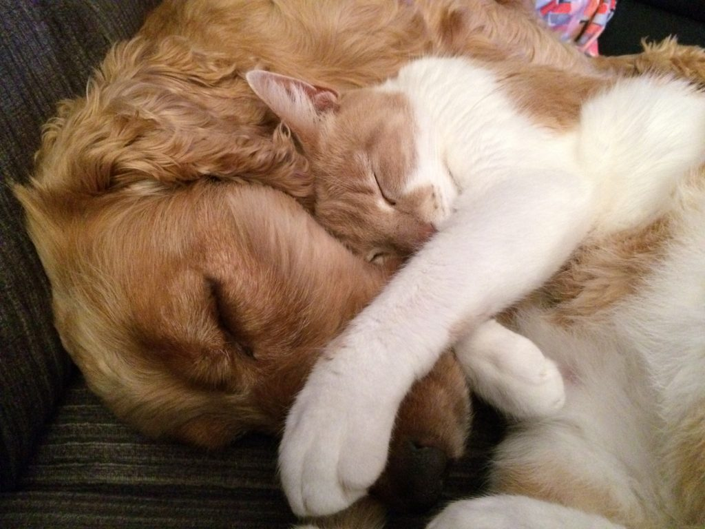 cuidados de mascotas