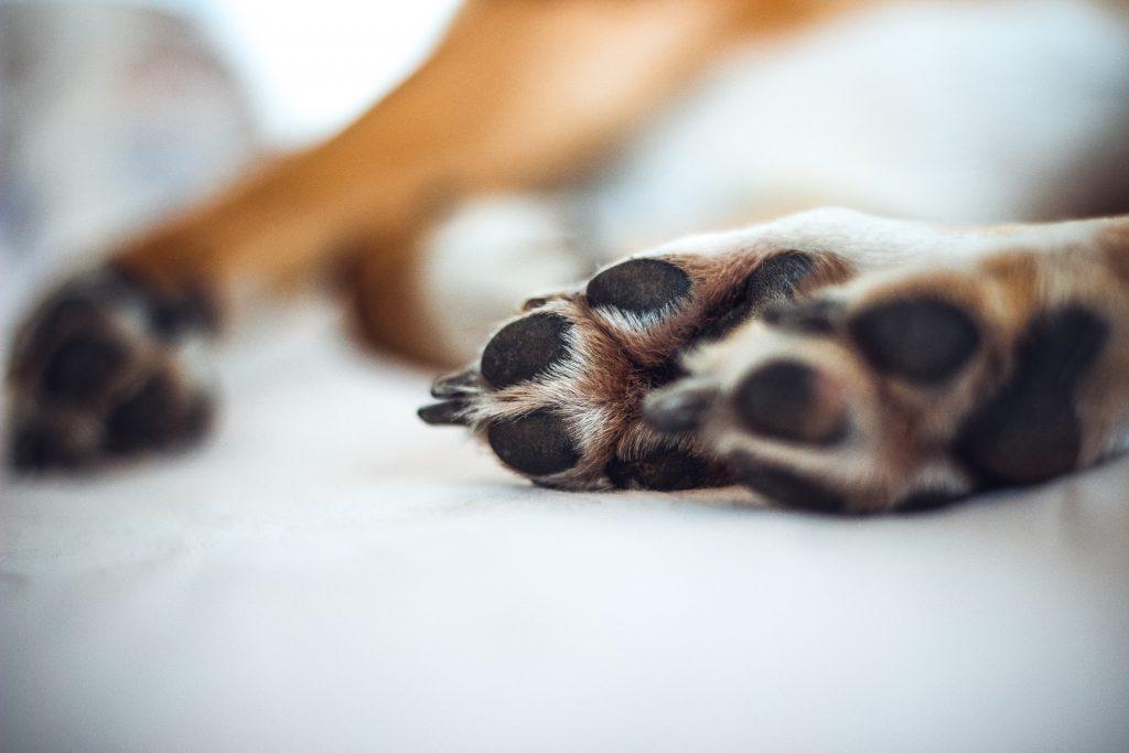 cuidados de mascotas las patas