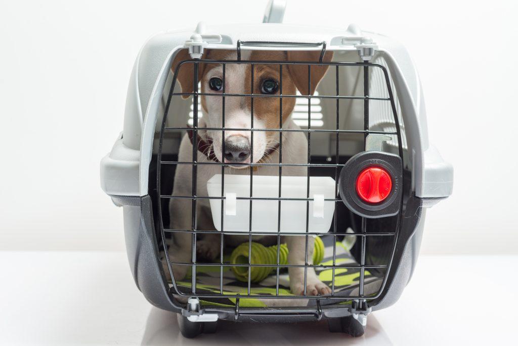 cuidados de mascotas limpiar el transportín
