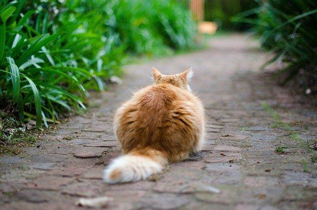 el gato se persigue la cola compulsivamente