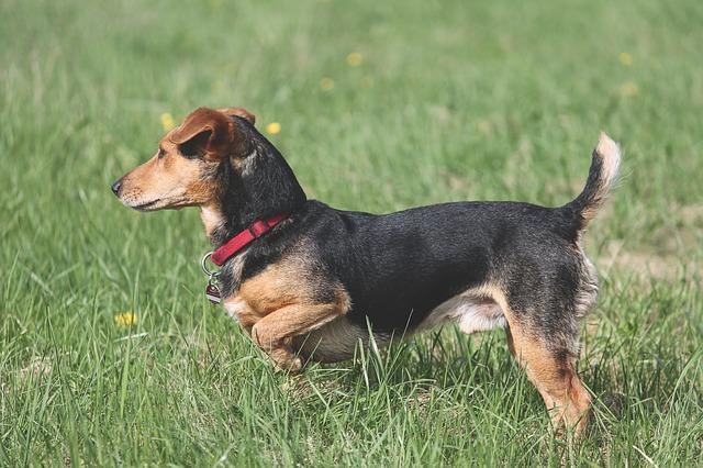 enfermedades de próstata en perros más comunes tumores