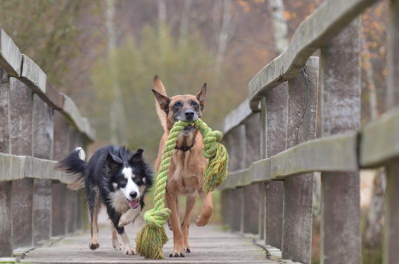 evitar el mal comportamiento de los perros