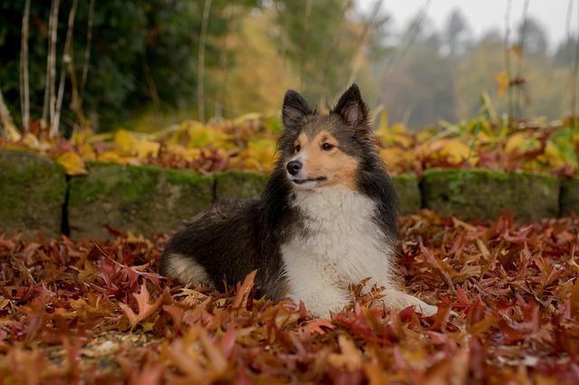indicios de un perro con alzheimer