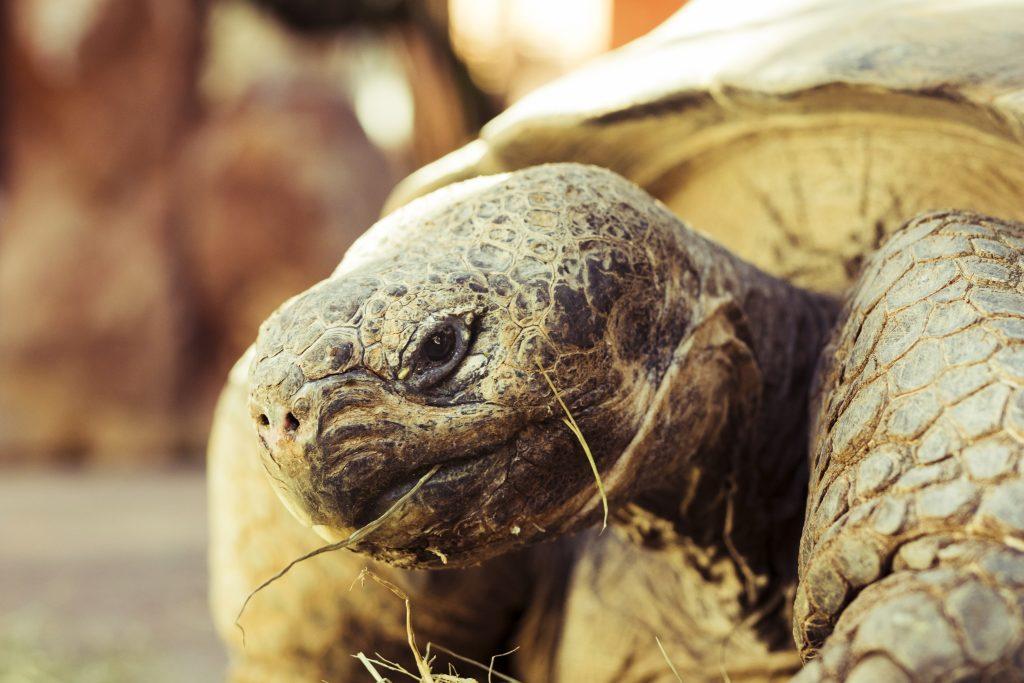 la desaparición de las tortugas causaría problemas