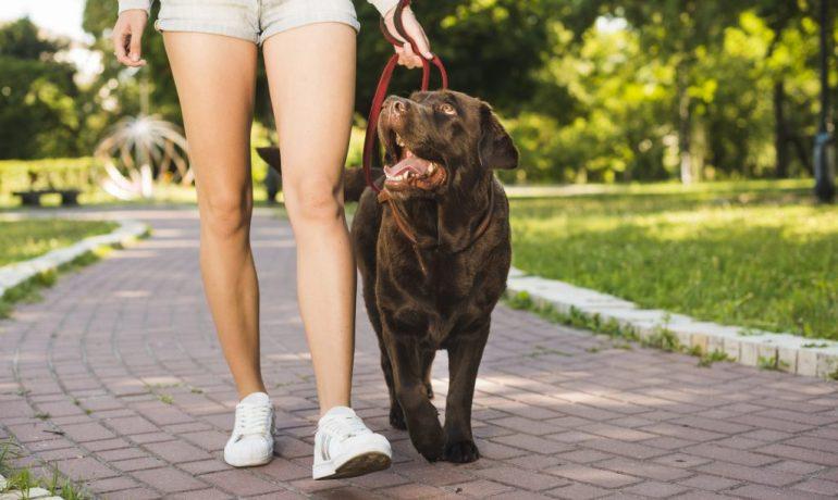 mascotas y coronavirus recomendaciones