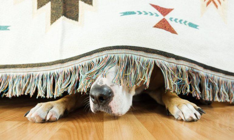 por qué mi perro tiembla