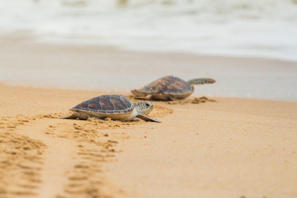 problemas derivados de la desaparición de las tortugas