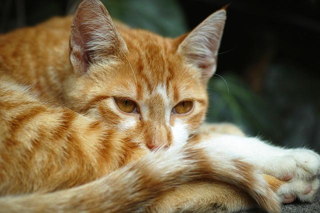 problemas si tu gato se persigue la cola