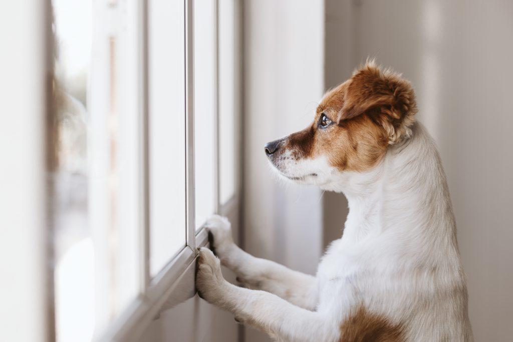 qué hacer si tu perro tiembla