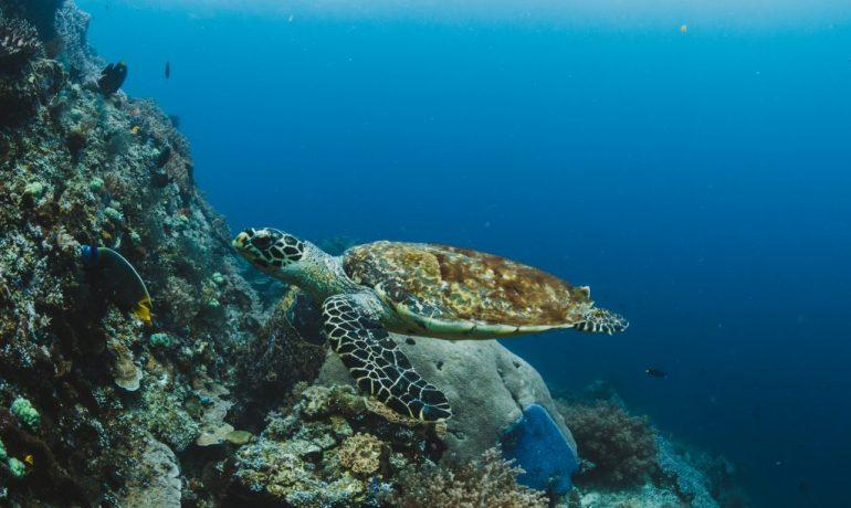 qué pasaría si se produce la desaparición de las tortugas