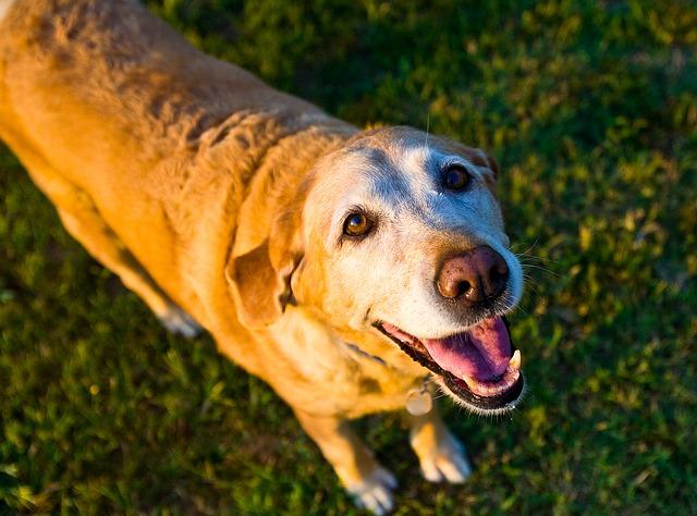 qué provoca el alzheimer en perros
