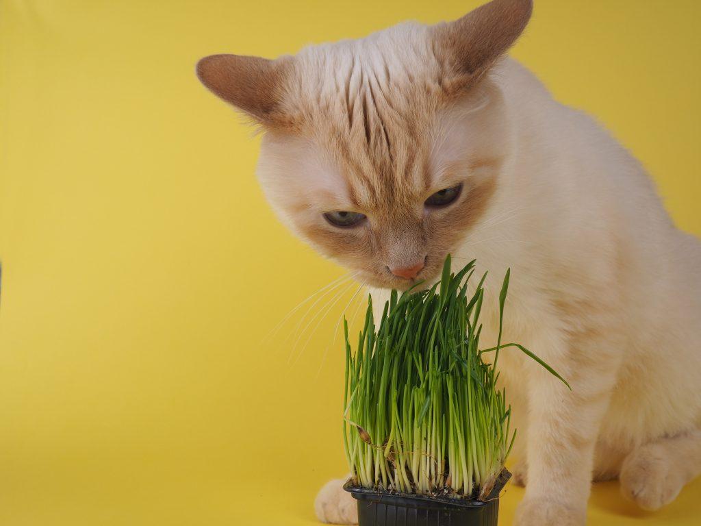 recomendaciones para la dieta astringente para gatos