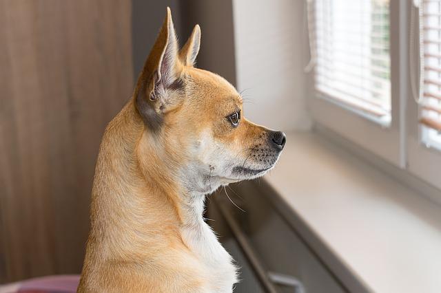 señales del alzheimer en perros