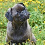 Síndrome vestibular en perros causas, síntomas y tratamiento