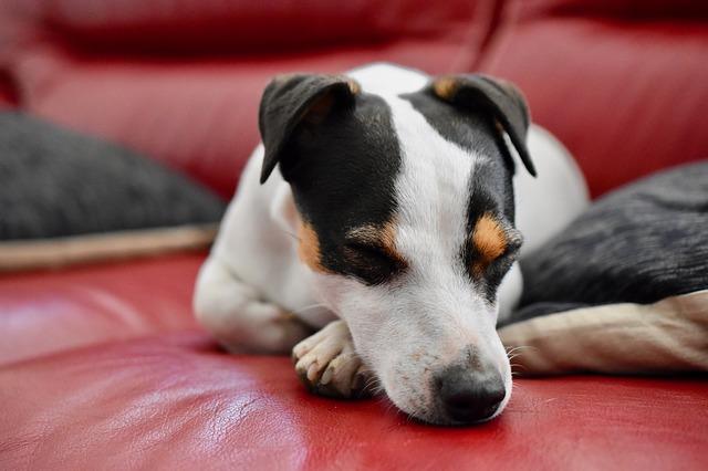 síntomas del alzheimer en perros