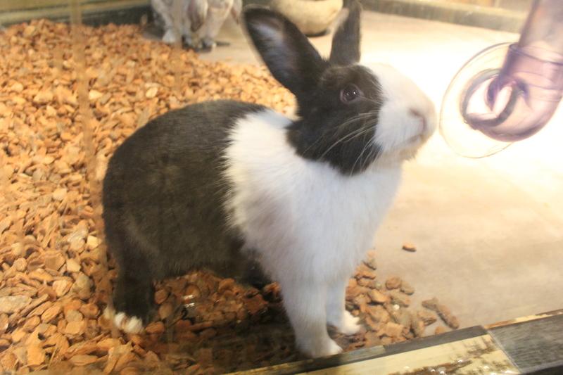 tips para evitar el estrés en conejos