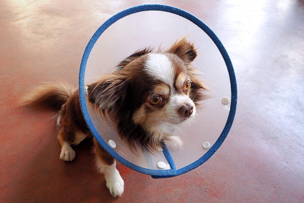 tratamiento del prurito canino