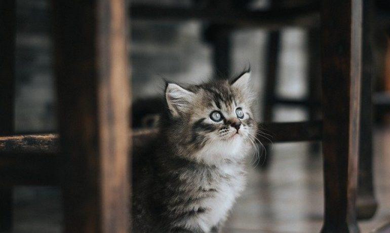 ansiedad por separación en gatos