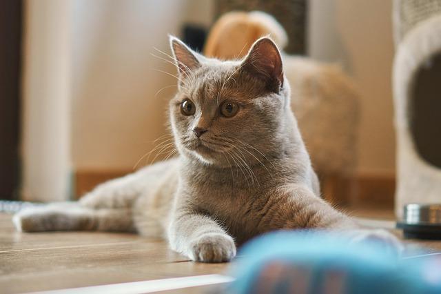 ansiedad por separación en gatos durante las vacaciones