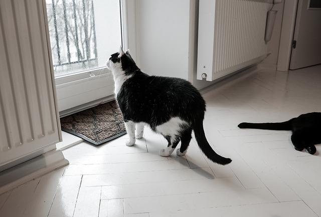 ayudar a un gato con ansiedad por separación