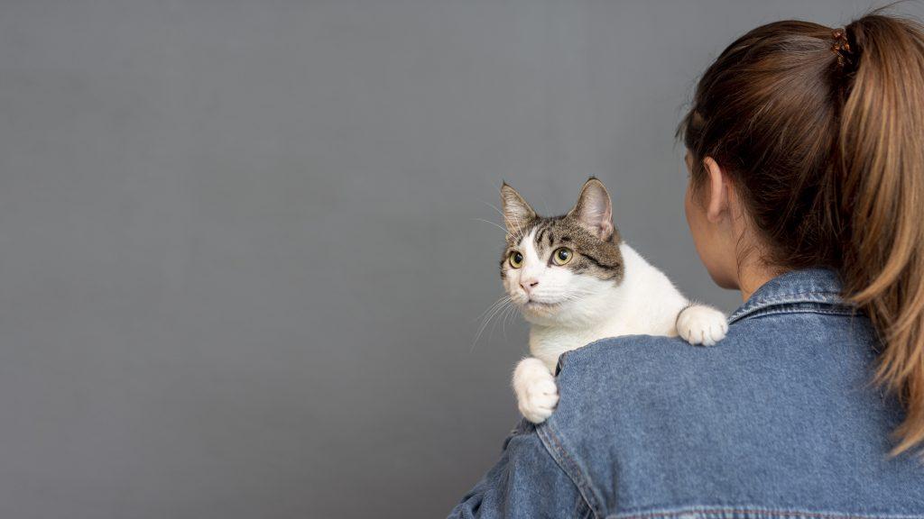 ayudar a un gato con miedo a las alturas