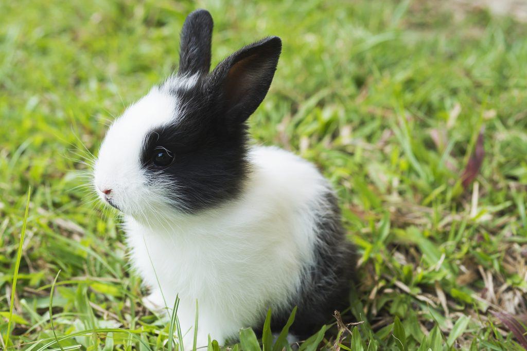 cómo entender el lenguaje corporal de los conejos