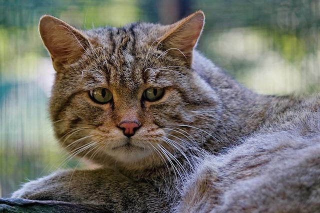 consejos para la ansiedad por separación en gatos