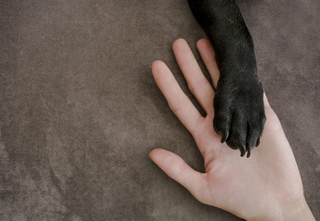 consejos para limpiar las patas de las mascotas