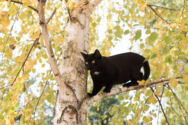 el gato tiene miedo a las alturas