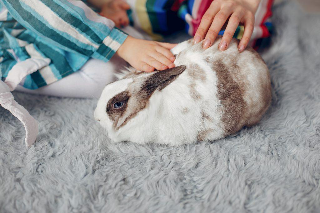 entender a los conejos por su lenguaje corporal